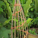 tuteur plantes